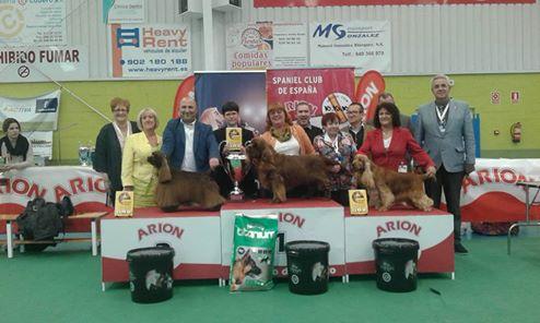 BIS European Spaniel Show